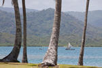 Kuna Boats Through the Palms