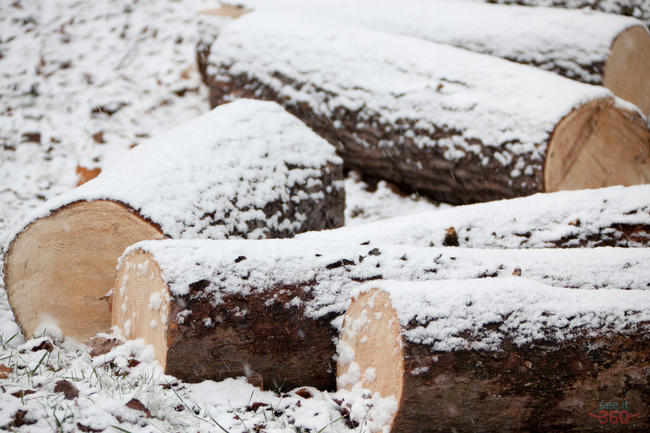 Logs cover with Snow
