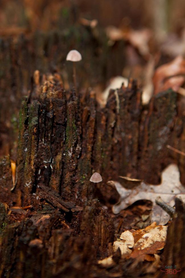 Little Mushrooms on tree