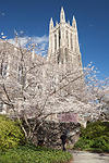 Duke University Chapel in Spring