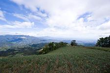 Onion fields of Boquete